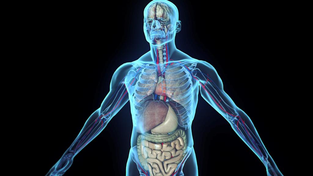 High Tech Podcast #8: Hebben we straks allemaal een digital twin van ons lichaam?